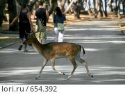 Купить «Гуляющий на свободе пятнистый олень», фото № 654392, снято 9 сентября 2008 г. (c) Fro / Фотобанк Лори