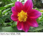Цветок. Стоковое фото, фотограф Екатерина Исаева / Фотобанк Лори