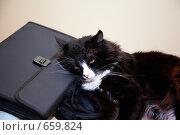 Купить «Черный кот отдыхает на портфеле», фото № 659824, снято 5 июля 2008 г. (c) Андрей Лавренов / Фотобанк Лори