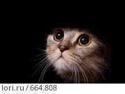 Купить «Кошка выглядывает из темноты», фото № 664808, снято 17 января 2009 г. (c) Баевский Дмитрий / Фотобанк Лори