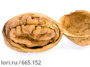 Купить «Грецкий орех», фото № 665152, снято 20 января 2009 г. (c) Юрий Коновал / Фотобанк Лори