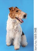 Купить «Собака», фото № 669948, снято 25 ноября 2007 г. (c) Николай Туркин / Фотобанк Лори