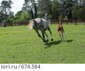 Купить «Лошадь с жеребенком», фото № 674584, снято 20 мая 2007 г. (c) Татьяна Кахилл / Фотобанк Лори