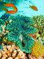 Гигантский моллюск (Tridacna maxima). Подводная съемка., фото № 677604, снято 20 ноября 2008 г. (c) Мельников Дмитрий / Фотобанк Лори