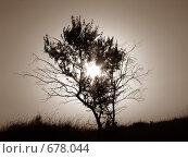 Дерево на закате. Стоковое фото, фотограф Алла Серова / Фотобанк Лори