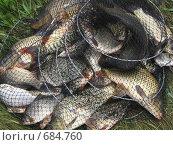 Купить «Удачный улов», фото № 684760, снято 21 июня 2008 г. (c) Робул Дмитрий / Фотобанк Лори