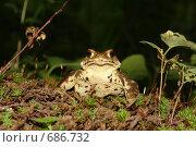 Царевна-лягушка. Стоковое фото, фотограф Роман Чабан / Фотобанк Лори