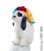 Кролик в цветастом берете. Стоковое фото, фотограф Александр Fanfo / Фотобанк Лори