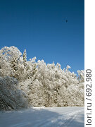 Опушка зимнего леса. Стоковое фото, фотограф Синюков Пётр Львович / Фотобанк Лори