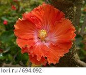 Купить «Экзотический цветок», эксклюзивное фото № 694092, снято 7 августа 2007 г. (c) Михаил Карташов / Фотобанк Лори