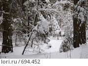 Снег в лесу. Стоковое фото, фотограф Levin Alexandr / Фотобанк Лори
