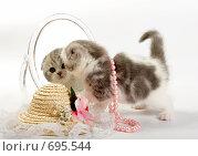 Купить «Котенок смотрится в зеркало», фото № 695544, снято 9 ноября 2008 г. (c) Cветлана Гладкова / Фотобанк Лори