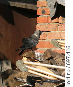 Птица на дровах. Стоковое фото, фотограф Ксения Блинкова / Фотобанк Лори
