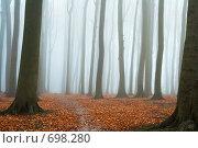 Купить «Туман в осеннем лесу», фото № 698280, снято 30 ноября 2006 г. (c) Михаил Лавренов / Фотобанк Лори