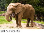 Слон (2008 год). Стоковое фото, фотограф Луговой Даниил / Фотобанк Лори