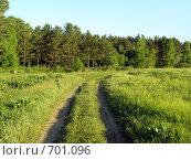 Зелёная дорога в поле посреди леса. Борзовая заимка. Стоковое фото, фотограф Антон Серохвостов / Фотобанк Лори