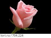 Купить «Цветок розовая роза на черном фоне», фото № 704224, снято 31 января 2009 г. (c) Криволап Ольга / Фотобанк Лори