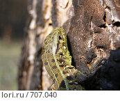Зелёная ящерица. Стоковое фото, фотограф Антон Серохвостов / Фотобанк Лори
