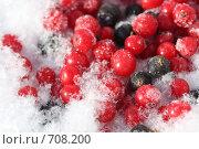 Ягоды красной и черной смородины на снегу. Стоковое фото, фотограф Виктория Фонькина / Фотобанк Лори