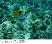 Купить «Подводный мир Мальдивы рыба», фото № 713236, снято 6 сентября 2008 г. (c) Сергей Учаев / Фотобанк Лори
