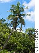 Купить «Пальма в Ансе Мэйджор, вид с моря», фото № 717020, снято 23 января 2009 г. (c) Игорь Никитенко / Фотобанк Лори