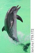 Купить «Дельфин», эксклюзивное фото № 719172, снято 21 сентября 2008 г. (c) Дмитрий Неумоин / Фотобанк Лори