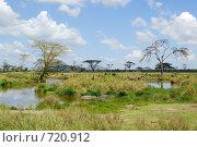 Купить «Маленькое озеро с бегемотами в Серенгети», фото № 720912, снято 23 января 2008 г. (c) Знаменский Олег / Фотобанк Лори