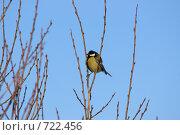 Купить «Синица на веточке», фото № 722456, снято 22 февраля 2009 г. (c) Шахов Андрей / Фотобанк Лори