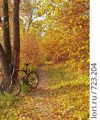 Осенняя тропинка (2008 год). Редакционное фото, фотограф Матвеев Артём / Фотобанк Лори