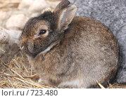 Купить «Маленький зайчонок», фото № 723480, снято 15 ноября 2008 г. (c) Pshenichka / Фотобанк Лори