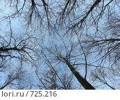Купить «Ветки деревьев на фоне голубого неба», эксклюзивное фото № 725216, снято 25 февраля 2009 г. (c) lana1501 / Фотобанк Лори