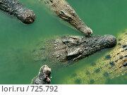 Купить «Крокодилы», фото № 725792, снято 7 декабря 2008 г. (c) Татьяна Белова / Фотобанк Лори