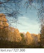 Купить «Осенний пейзаж», фото № 727300, снято 8 октября 2008 г. (c) Юрий Бельмесов / Фотобанк Лори