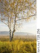 Купить «Осенний пейзаж», фото № 728256, снято 8 октября 2008 г. (c) Юрий Бельмесов / Фотобанк Лори