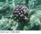 Купить «Подводный мир, Мальдивы», фото № 728424, снято 7 сентября 2008 г. (c) Сергей Учаев / Фотобанк Лори