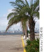 Пальмы на фоне Панама-сити (2009 год). Стоковое фото, фотограф tyuru / Фотобанк Лори