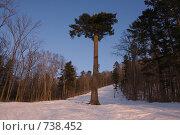 Купить «Дерево», фото № 738452, снято 28 февраля 2009 г. (c) Леонид Селивёрстов / Фотобанк Лори