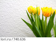 Купить «Желтые тюльпаны», фото № 740636, снято 25 февраля 2009 г. (c) Asja Sirova / Фотобанк Лори