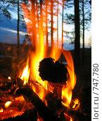 Костер в лесу. Стоковое фото, фотограф Александр Бедо / Фотобанк Лори