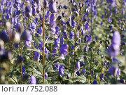 Фиолетовые цветы. Стоковое фото, фотограф Борщёв Роман / Фотобанк Лори