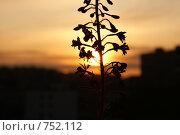 Цветок на фоне солнца. Стоковое фото, фотограф Борщёв Роман / Фотобанк Лори