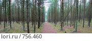 Купить «Панорама леса», фото № 756460, снято 24 февраля 2008 г. (c) Константин Тронин / Фотобанк Лори