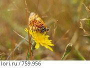 Бабочка. Стоковое фото, фотограф Нездольева Мария / Фотобанк Лори