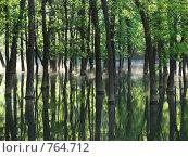 Деревья в озере. Стоковое фото, фотограф Андрей Авдеев / Фотобанк Лори