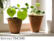 Купить «Рассада на окне», фото № 764940, снято 18 марта 2009 г. (c) Tatiana / Фотобанк Лори