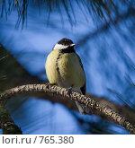 Купить «Синица», фото № 765380, снято 21 марта 2009 г. (c) Argument / Фотобанк Лори