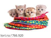 Купить «Котята в сумке», фото № 766920, снято 21 марта 2009 г. (c) Cветлана Гладкова / Фотобанк Лори