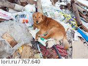 Купить «Собака на свалке», фото № 767640, снято 25 апреля 2018 г. (c) Парушин Евгений / Фотобанк Лори
