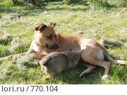 Купить «Кормление. Фокус на щенке», фото № 770104, снято 25 сентября 2008 г. (c) Таисия Черемных / Фотобанк Лори