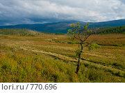 Купить «Карликовая березка», фото № 770696, снято 23 августа 2008 г. (c) Алексей Еманов / Фотобанк Лори